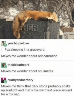 Logic, Sleeping, and Reincarnation: ER  NGELINE BUCK  yourhippielove  Fox sleeping in a graveyard.  Makes me wonder about reincarnation  thekidsatheart  Makes me wonder about soulmates  nudityandnerdery  Makes me think that dark stone probably soaks  up sunlight and that's the warmest place around  for a fox nap. Deep thoughts, deep thoughts, logic.