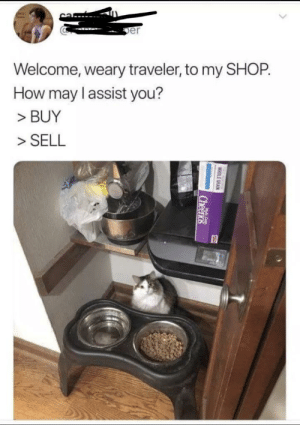 Cutest thing ever: er  Welcome, weary traveler, to my SHOP.  How may l assist you?  > BUY  >SELL Cutest thing ever