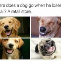 Memes, 🤖, and Dog: ere does a dog go when he loses  ail? A retail store. SO CUTE 😭😍 Turn on post notifications if you haven't already so you dont miss my puns! ♥️