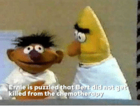 Bertstrips: Ernie is puzzled that Bert dlid  killed from the chemothera  py