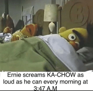 Can, Rip, and A&m: Ernie screams KA-CHOW as  loud as he can every morning at  3:47 A.M Rip Bert