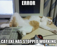 Cats, Memes, and Work: ERROR  CAT EXE HAS STOPPED WORKING  memecenter.com Cat error :3