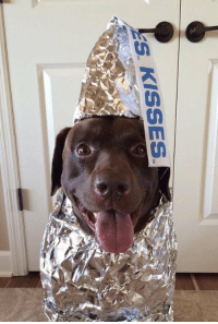 Chocolate, Kiss, and Girl Memes: ES KISSES a chocolate kiss you can never say no to