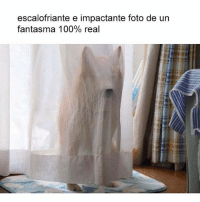 Anaconda, Esta, and Real: escalofriante e impactante foto de urn  fantasma 100% real x si aun no crees en los fantasmas, mira esta foto