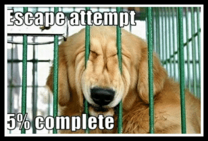 Hilarious Dog Memes To Save The Day - ILoveDogsAndPuppies: Escape attempL  5% COmplete Hilarious Dog Memes To Save The Day - ILoveDogsAndPuppies