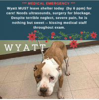 **** EMERGENCY! EMERGENCY! ***   CAN YOU FOSTER OR ADOPT?  WYATT NEEDS IMMEDIATE PLACEMENT & TREATMENT!  He must get to a Vet Hospital by 6PM Today for possible foreign body!  Poor Wyatt has so little time.  He was just circulated as an emergency pup who needs vet care NOW and must leave the shelter by 6:00 p.m. so he can get immediate abdominal ultrasound and surgery if operable.   The medical staff are recommending EHR (euthanasia) if additional medical requirements cannot be provided as soon as possible.  ☹    Wyatt may have a blockage, a foreign body that could cause him to lose his life.   He needs a foster or adopter asap!  If you foster, the rescue that pulls will pay his medical bills and you will provide supportive care.  Hurry and  MESSAGE our page or email us at MustLoveDogsNYC@gmail.com for assistance fostering or adopting her.   Other Notes:   Wyatt has been flagged as a cruelty case for neglect.  He broke the medical staff's heart when he was so sweet, allowing all handling, and even kissing throughout his blood draw and exam.   Finder Notes: Finder stated she had found two days ago in the Bronx. The client stated that she was on her way to visit someone in the area when she saw this dog walking by itself on the side walk. The client stated that she decided to take the dog because the dog was very skinny and appeared ill...Wyatt ate the food she offered him however, he has been throwing up all of his food and then will eat his vomit. The client stated that this happened at least 4 times since she's had him.  WYATT, ID # 53030 @ 6 Yrs. Old, 31 severely emaciated lbs. Brooklyn ACC, Medium Breed, Brown, Male Owner Surrender Reason:  Stray Shelter Assessment Rating:     Medical Behavior Rating:    1.  Green  MEDICAL EXAM NOTES  DVM Intake Exam.  Blood work history:   Mild microcytic nonregenerative anemia.  Very mild monocytosis.  Mildly hypochloremic with normal sodium.  Mild hyperglobulinemia, Low T4.  Subjective: History of vomitting. Pt has been vomitt