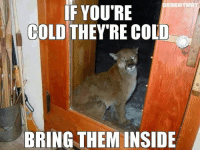 Cute, Memes, and Cold: ESERTBAT  IF YOU'RE  COLD  THEY'RE COLD  BRING THEM INSIDE What a cute racoon