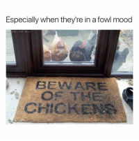 Funny, Mood, and Hilarious: Especially when they're in a fowl mood  BEVWARE  CHICKENE @funny is genuinely a hilarious page to follow 😂