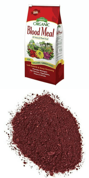 kaijubrains: genderdeath: speaking of which, i hope all of my mutuals know that you can go on down to the hardware store and just buy a big ol bag of dried blood Forbidden nesquik  : Espoma.  ORGANIC  Blood Meal  All Natural Plant Food  FOORGANIC GARDENING  ING  Lush Growth& Deep Greening  Provides Nitrogen  For Flowers, Vegetables  Trees & Shrubs kaijubrains: genderdeath: speaking of which, i hope all of my mutuals know that you can go on down to the hardware store and just buy a big ol bag of dried blood Forbidden nesquik