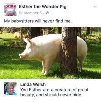 "Http, Never, and Wonder: Esther the Wonder Pig  September 5.o  My babysitters will never find me.  Linda Welsh  You Esther are a creature of great  beauty, and should never hide <p>Esther should never hide via /r/wholesomememes <a href=""http://ift.tt/2kPxnJN"">http://ift.tt/2kPxnJN</a></p>"