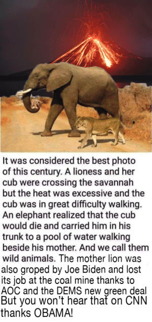 Animals, Be Like, and cnn.com: et.  It was considered the best photo  of this century. A lioness and her  cub were crossing the savannah  but the heat was excessive and the  cub was in great difficulty walking.  An elephant realized that the cub  would die and carried him in his  trunk to a pool of water walking  beside his mother. And we call them  wild animals. The mother lion was  also groped by Joe Biden and lost  its job at the coal mine thanks to  AOC and the DEMS new green deal  But you won't hear that on CNN  thanks OBAMA! Right Wing Social Media Posts Be Like...