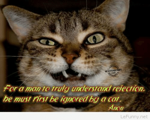 Funny quotes cat quotes about funny things and thehttp://omg-humor.tumblr.com: et OTENET DBY  For a man to truly understand reiection.  be must rirsi be ignored by a cai.  Anon  LeFunny.net Funny quotes cat quotes about funny things and thehttp://omg-humor.tumblr.com