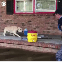 "Memes, Heart, and Baby: ETA  IG This poor little baby was so scared, but thankfully he got rescued. ......."" An abandoned dog anxiously paces across a porch surrounded by Florence's floodwaters, when someone finally arrives to rescue him. His reaction is all heart."" https://cbsn.ws/2MKmuBu"