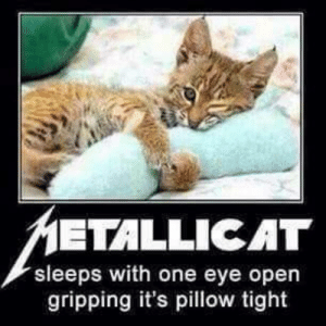 Metallicat: ETALLICAT  sleeps with one eye open  gripping it's pillow tight Metallicat