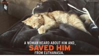 Memes, 🤖, and Euthanasia: etchr  A WOMAN HEARD ABOUT HIM AND  SAVED HIM  FROM EUTHANASIA. Ben might have truly been the saddest cat in the world, until one woman said he deserved a second chance. http://petcha.com/pets/ben-is-no-was-the-saddest-cat-in-the-world-trending/