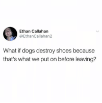 Dogs, Funny, and Shoes: Ethan Callahan  @EthanCallahan2  What if dogs destroy shoes because  that's what we put on before leaving? This just fuqqed me up