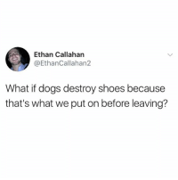 Dogs, Fam, and Memes: Ethan Callahan  @EthanCallahan2  What if dogs destroy shoes because  that's what we put on before leaving? fucc me up fam