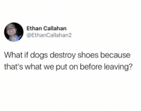 Dank, Dogs, and Shoes: Ethan Callahan  @EthanCallahan2  What if dogs destroy shoes because  that's what we put on before leaving?