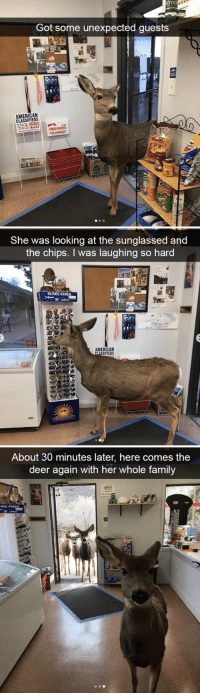 This made my day: ETOO  Got some unexpected guests  ET SETOO  AMERICAN  CLASSIFIEDS  FREE   She was looking at the sunglassed and  the chips. I was laughing so hard  SUNGLASSES  AMERICAN  SSIFIEDS   About 30 minutes later, here comes the  deer again with her whole family  NGLASSES This made my day