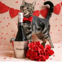 . ╰☆╮🌹WINNER 🌹╰☆╮ . ♥️💫 CONGRATULATIONS 💫♥️ . @neemiebear . You're one of the winners of our Valentine Contest ⇨ meow_myvalentine hosted by . ♡ @meow_beauties ♡ @cat_features ♡ @meowsandwoofs ♡ @balous_friends ♡ @kittylookbook ♡ @elegant_cats . Each entry was filled with so much love and it was incredibly difficult for us to choose only 3 winners. We absolutely could not decide between 5 pictures so we have 5 amazing winners 💞 . ♥️ Thanks to all who participated ♥️: ETTO  Champagne . ╰☆╮🌹WINNER 🌹╰☆╮ . ♥️💫 CONGRATULATIONS 💫♥️ . @neemiebear . You're one of the winners of our Valentine Contest ⇨ meow_myvalentine hosted by . ♡ @meow_beauties ♡ @cat_features ♡ @meowsandwoofs ♡ @balous_friends ♡ @kittylookbook ♡ @elegant_cats . Each entry was filled with so much love and it was incredibly difficult for us to choose only 3 winners. We absolutely could not decide between 5 pictures so we have 5 amazing winners 💞 . ♥️ Thanks to all who participated ♥️