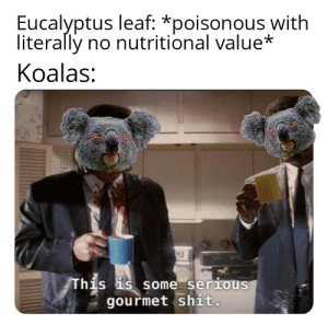 Give me L E A F by n1GG99 MORE MEMES: Eucalyptus leaf: *poisonous with  literally no nutritional value*  Koalas:  his s some serious  gourmet shit Give me L E A F by n1GG99 MORE MEMES