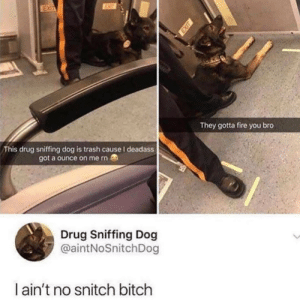 This doggo crazy!: EUT  EXIT  They gotta fire you bro  This drug sniffing dog is trash cause I deadass  got a ounce on me rn  Drug Sniffing Dog  @aintNoSnitchDog  I ain't no snitch bitch This doggo crazy!