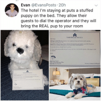 Bailey Jay, Heaven, and Memes: Evan @EvansPosts 20h  The hotel I'm staying at puts a stuffed  puppy on the bed. They allow their  guests to dial the operator and they will  bring the REAL pup to your room  hotel nikko san francisco  Deor Goest,  Welcome to Hol Niko Son Franisco t on so glod you're hene ond I look fonward so spending  me wih you during your slay  ndo$29 00, h  Rocket Dog Rec  $200 of your purchove wil benel our locnl aninal sh  You con dho find me in the gih shop for porchoe  xOxO  Buster Posey Preus  COO, Conine Opergting Officer  Holel Nko Son franoso  Find me on Iratogrom Gnkkopup Is this heaven