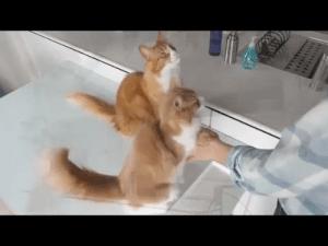 Cats, Awkward, and Feel: Even cats feel awkward after being left hanging