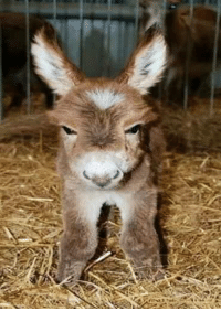 "Even I might change my ""I'm plenty of donkey for this barn"" rule for this little guy. Can I get an ""aaaaawwwwww"".: Even I might change my ""I'm plenty of donkey for this barn"" rule for this little guy. Can I get an ""aaaaawwwwww""."