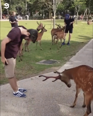 Dank, Japan, and 🤖: Even the deers in Japan are polite