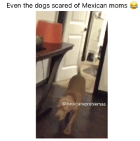 Dogs, Memes, and Moms: Even the dogs scared of Mexican moms  @mexicansproblemas Lmaooo the dogs already know 😂 MexicansProblemas Cred @kary.amaro