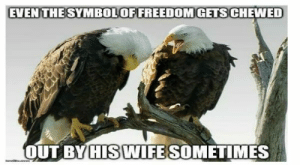 American Eagle Day celebrates this majestic bird and its place in it's country's history#America #Americanhistory #American eagles #Eagles #Eaglememes #funny memes #funnyanimalmemes: EVEN THESYMBOLOFFREEDOMGETS CHEWED  OUT BY HIS WIFE SOMETIMES American Eagle Day celebrates this majestic bird and its place in it's country's history#America #Americanhistory #American eagles #Eagles #Eaglememes #funny memes #funnyanimalmemes