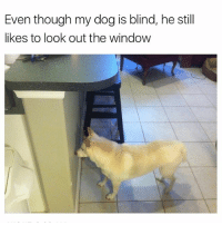 Funny, Low Key, and Meme: Even though my dog is blind, he still  likes to look out the window @breakcom is low key killing the meme game right now