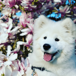 Even though we are confined to walks in the neighborhood right now, it is still apparent that spring has sprung!: Even though we are confined to walks in the neighborhood right now, it is still apparent that spring has sprung!