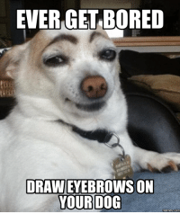doges: EVER GET BORED  DRAWEYEBROWS ON  YOUR DOG  memes com