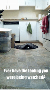 Memes, 🤖, and Cat: Ever have the feeling you  were being watched?  Love Funny Cats,me