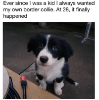 (@dogsbeingbasic) posts truly amazing pupper memes. (Pic: Reddit u-LeDootyMcDootface): Ever since I was a kid I always wanted  my own border collie. At 28, it finally  happened (@dogsbeingbasic) posts truly amazing pupper memes. (Pic: Reddit u-LeDootyMcDootface)