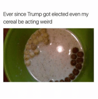 Memes, Weird, and Trump: Ever since Trump got elected even my  cereal be acting weird Well dam