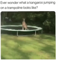 Trampoline, Wonder, and Kangaroo: Ever wonder what a kangaroo jumping  on a trampoline looks like? Emptying the savings
