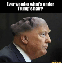 Finals, Funny, and Hair: Ever wonder what's under  Trump's hair  ifunny.CO It finally makes sense.