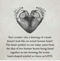 <3: Ever wonder why a drawing of a heart  doesn't look like an actual human heart?  The heart symbol we use today came from  the idea of two human hearts being fused  together as one forming the iconic  heart-shaped symbol we know as LOVE. <3