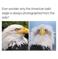 "Dumb, Target, and Tumblr: Ever wonder why the American bald  eagle is always photographed from the  side?  IG: @dumb.jpeg <p><a class=""tumblr_blog"" href=""http://stability.tumblr.com/post/138682214016"" target=""_blank"">stability</a>:</p> <blockquote> <p>the face of freedom 🇺🇸</p> </blockquote>"