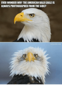 Memes, Eagle, and 🤖: EVER WONDER WHY THE AMERICAN BALD EAGLE IS  ALWAYS PHOTOGRAPHED FROM THE SIDE?  EATLIVER.COM Ahhhhh.....I've been there! 😬