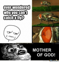 So that's how they do it: ever wondered  Why you can't  Catch a fly  MOTHER  OF GOD! So that's how they do it