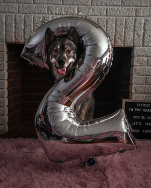 Birthday pupper!: EVEREST  I'M TWO YEARS  NOV 25, 20  LET'S PAW  THER PUPP Birthday pupper!