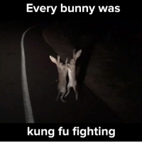 Bunnies, Memes, and Rabbit: Every bunny was  kung fu fighting I didn't even know rabbits could stand like that! Turn on the sound for a hilarious experience! 🔊 via - JukinMedia