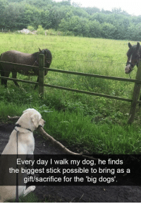Animals, Cute, and Dogs: Every day I walk my dog, he finds  the biggest stick possible to bring as a  gift/sacrifice for the 'big dogs' Okay, admit it: you know you want to squee so loud at these adorable animals. #DogMemes #AnimalMemes #Cute #Snapchat