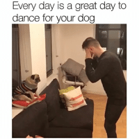 Memes, Pugs, and 🤖: Every day is a great day to  dance for your dog Tag someone who needs to dance for their dog 🔊 literallythatsyou dfyd . danseuse @jongraz pug who can't be bothered @showmenoodz