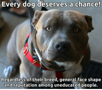 Memes, 🤖, and Dog: Every dog deserves a chance  Instinct  Regardless of their breed, general face shape  and reputation among uneducated people. Do you agree?