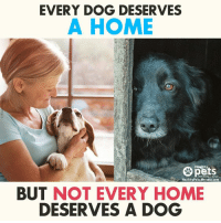 mercola: EVERY DOG DESERVES  A HOME  Healthy  Healthy Pets. Mercola.com  BUT NOT EVERY HOME  DESERVES A DOG